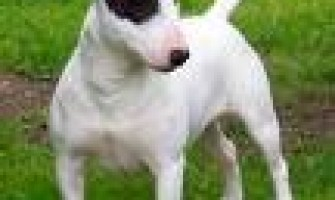 Clonando perros comercialmente