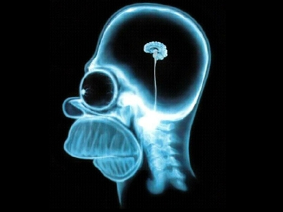 homer-simpson-brain-10241.jpg