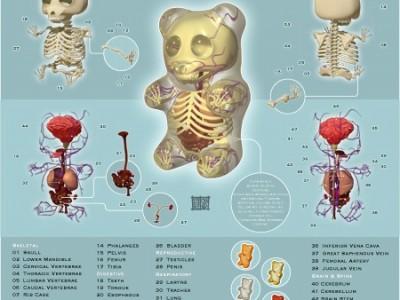 La anatomía de un pandita