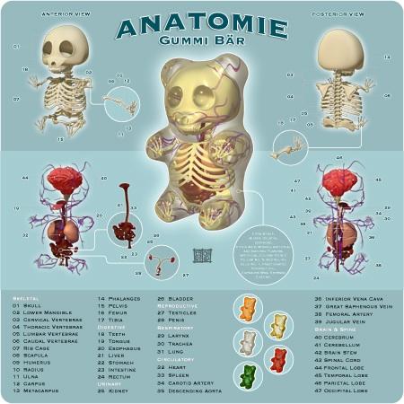 Anatomía De Los Pandas | Pandas