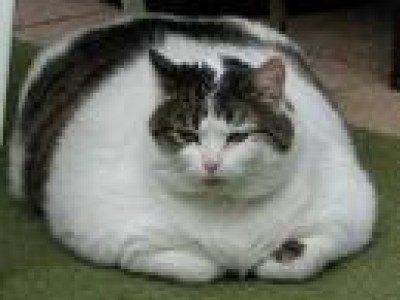 Epidemia de mascotas obesas