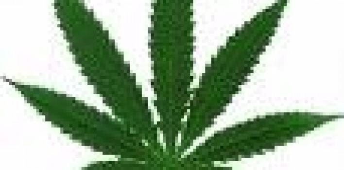 La mariguana podría prevenir el Alzheimer