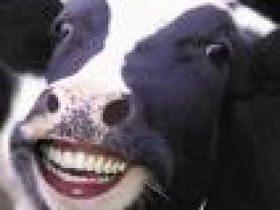 Las vacas con nombre producen más leche