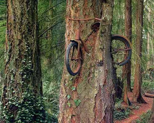 Un árbol se merienda una bici