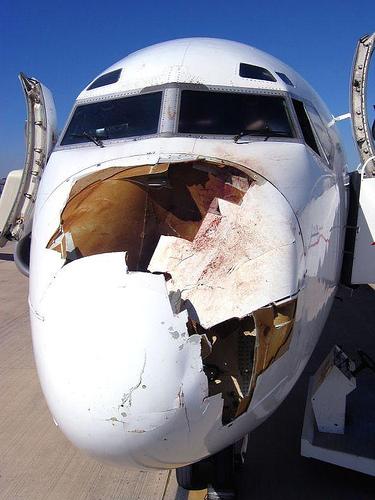Pájaros impactados en aviones