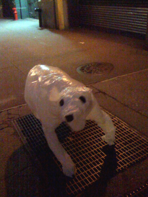 dog-plastic-bag.jpg