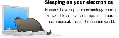 ¿Cómo saber si tu gato planea matarte?