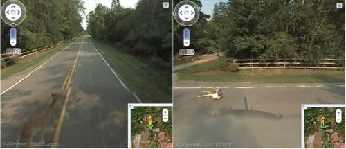 Un coche de Google arrolló un venado